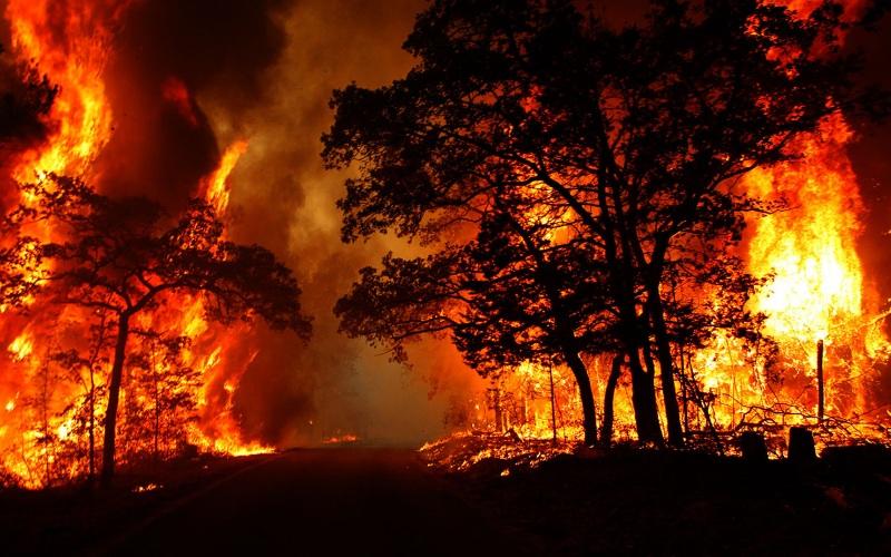 Chiêm bao thấy hạn hán và cháy rừng là điềm báo bạn phải đối diện với những khó khăn trong cuộc sống